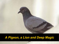 A Pigeon, a Lion and Deep Magic