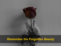 Remembering the Forgotten Beauty