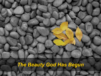 The Beauty God Has Begun