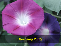 Revolting Purity