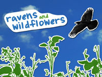 Ravens and Wildflowers