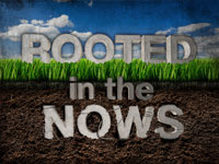 Rooted in the Nows